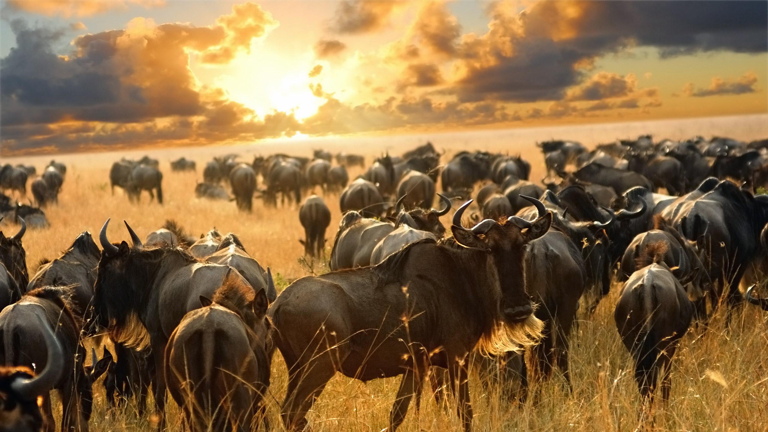 Masai Mara, Victoria Falls & Cape Town